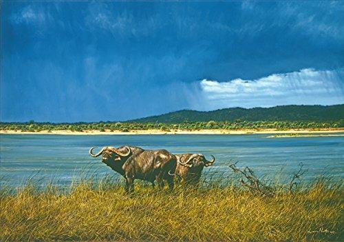 Continental Shift Ltd Kunstdruck auf Leinwand, Motiv Zambezi Storm von Marry Norton, 1010 x 710 mm, aus Südafrika gedruckt Tiger Print Shift