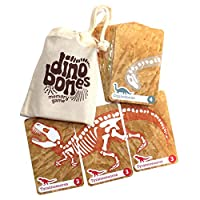 Dino Bones - Dinosaur Memory Game