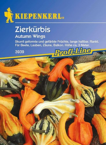 Kiepenkerl Zierkürbis Autumn Wings
