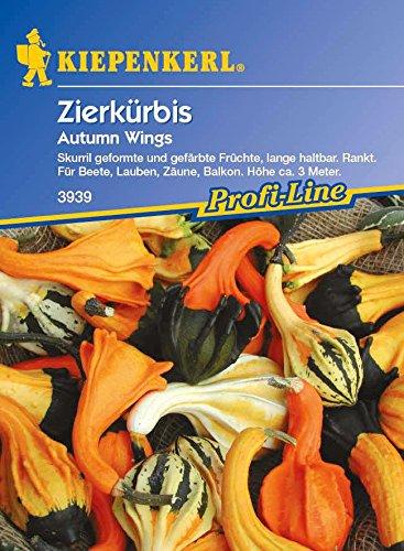 Kiepenkerl Zierkürbis Autumn Wings