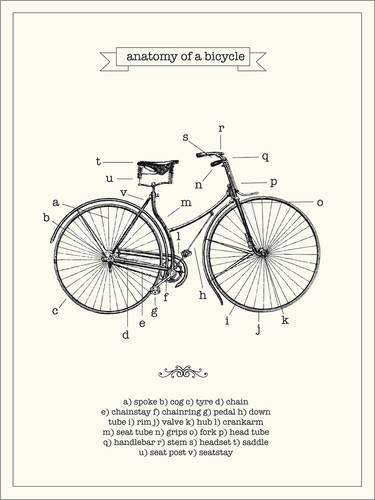 Póster 100 x 130 cm: Vintage parts of a Bicycle anatomy de Nory Glory