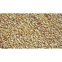 Imported Canary Seeds