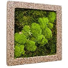 Moosbild, immergrünes Wandbild, Pflanzbild, Rahmen natur, 50 x 50 cm, EVRGREEN