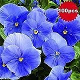 Portal Cool 100Pcs Elegante blu sera Primula semi di piante da giardino fiore Decor Tr67