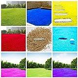Portal Cool # 06: Semences à gazon vivace Herbe Bush bleu brûlant Kochia Scoparia Graine Ornement Ggdf