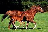 1art1 48885 Pferde - Stute mit Fohlen Poster 91 x 61 cm