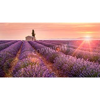 adrium Leinwand-Bild 150 x 80 cm:Provence, Valensole Plateau, France, Europe. Lonely farmhouse and cypress tree in a Lavender field in bloom, sunrise with sunbur, Bild auf Leinwand