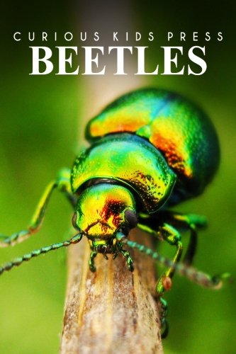 beetles-curious-kids-press-kids-book-about-animals-and-wildlife-childrens-books-4-6