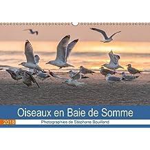 Oiseaux en Baie de Somme (Calendrier mural 2018 DIN A3 horizontal): Les oiseaux de la baie de Somme en action ! (Calendrier mensuel, 14 Pages ) (Calvendo Nature)
