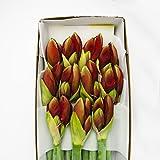5 frische Amaryllis 3-4 Blüten pro Siel, Hippeastrum, Blumenversand