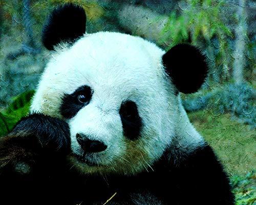 ADVLOOK Malen Nach Zahlen Für Kinder Trauriger Pandabär Tier Erwachsene Anfänger Handgemalte Zeichnung Leinwand Färbung DIY Kunstwerk Hauptdekoration Geschenk Frameless 40X50Cm
