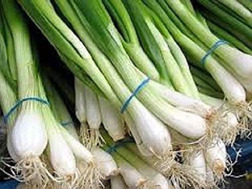 AGROBITS Bio-Evergreen Weiß Bunching Zwiebeln 50+ Seed A pless Variety Mild Geschmack -