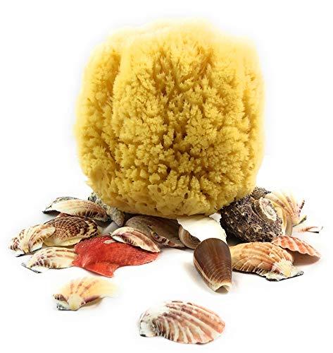 Seta naturale spugna di mare - forte e resistente - 100% naturale e organica - ipoallergenico - con fibre microscopiche - neonati, bambini e adulti, per fare il bagno, esfoliante e make-up