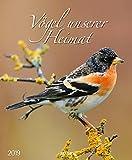 Vögel unserer Heimat 208819 2019: Wandkalender groß. Fotokunst-Kalender mit Bildern von Vögeln in der heimischen Natur. 45,5 x 55 cm