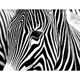 Fototapete Zebra Vlies Wand Tapete Wohnzimmer Schlafzimmer Büro Flur Dekoration Wandbilder XXL Moderne Wanddeko - 100% MADE IN GERMANY - Afrika Schwarz Weiß Runa Tapeten 9034010c