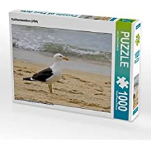 Kalifornienmöwe (USA) 1000 Teile Puzzle quer: ein freies und wildes Leben an den Küsten der USA, Neuseeland und Australien (CALVENDO Tiere)