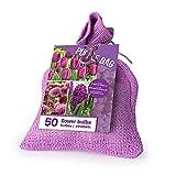 Zwiebelmix 'Lila' im Jutesack - 50 Stück Blumenzwiebeln, Direkt von holländischem Boden