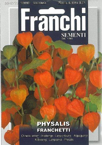 Franchi Lanternes chinoises Physalis Franchetti