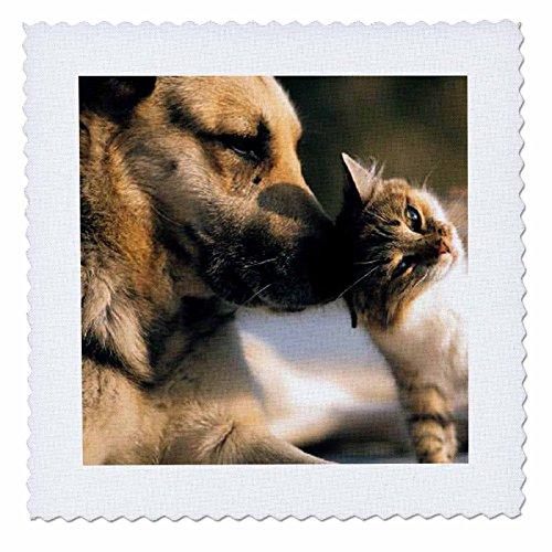 �Katzen und Hunde Quilt Platz, 10von 25,4cm (Quilt Square Hund)