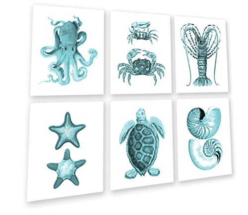 Gnosis Picture Archive Mediterraner Decor Türkis Art Wand 6er-Set Bild gerahmt Meer Schildkröte Muscheln Seestern Octopus Sealife 603Türkis