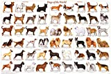 Dogs of the World Popular Breeds Chart Poster 36 x 24 by 123Posters