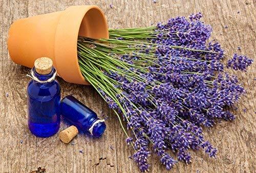 Home Garden - Lavender\
