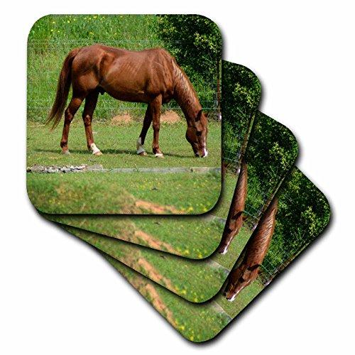 whiteoaks Fotografie und Artwork–Pferde–Braun Pferd im Bereich ist ein Foto der Pferde Gras essen–Untersetzer, Gummi, braun, set-of-8-Soft (Gras Essen)