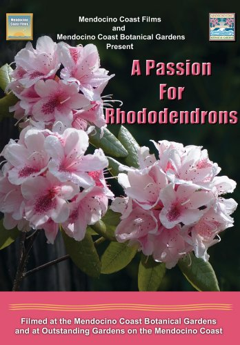 a-passion-for-rhododendrons