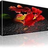 Bilder Iris Blume Bild auf Leinwand 1-Teilig: 80x45 cm