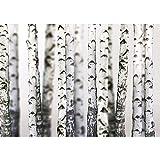 Vlies Fototapete PREMIUM PLUS Wand Foto Tapete Wand Bild Vliestapete - Bäume Birken Wald Stamm - no. 2111, Größe:254x184cm Blueback Papier