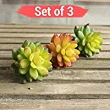 Tied Ribbons Set Of 3 Artificial Succulent Plants For Home Decor | Succulent Artificial Plants Set | Succulent Artificial Plants