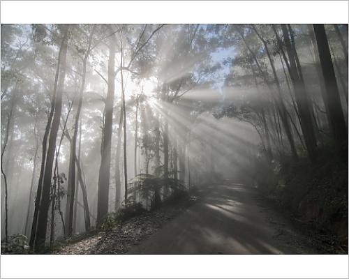 photographic-print-of-strong-sun-rays-strech-through-the-forest-and-over-a-road-through-heavy-mist