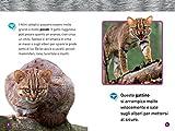 Felini-Livello-1-Ediz-illustrata