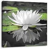 Weiße Lotusblume im Wasser B&W Detail, Format: 60x60 auf Leinwand, XXL riesige Bilder fertig gerahmt mit Keilrahmen, Kunstdruck auf Wandbild mit Rahmen, günstiger als Gemälde oder Ölbild, kein Poster oder Plakat