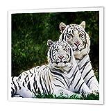 3dRose Blanc Tigers-Quilt carré, Multicolore, X 15,2cm