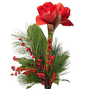 blumenversand blumenstrau zu weihnachten advent eine sch ne rote amaryllis arrangiert. Black Bedroom Furniture Sets. Home Design Ideas