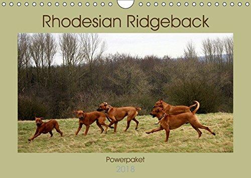 Rhodesian Ridgeback Powerpaket (Wandkalender 2018 DIN A4 quer): Kraft,Power,Schnelligkeit sowie eine...