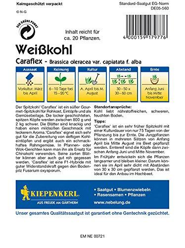 Kohlsamen – Spitzkohl Caraflex von Kiepenkerl