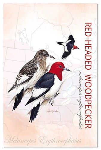 tree-free mit 66301red-headed Woodpecker blanko-Set -