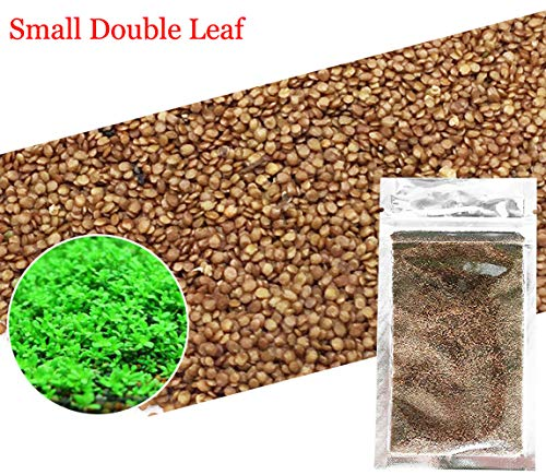 Aquarium Grass Plants Seeds,Aquatic Double Leaf Carpet for sale  Delivered anywhere in UK