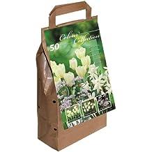 Greenbrokers Sachet de 50 bulbes de fleurs d'été Blanc
