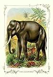 Fine Art Print–Der Elefant, 1900von Bentley Global Arts Gruppe, Papier, multi, 7 x 11