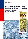 Ganzheitliche Behandlung von Kaninchen und Meerschweinchen: Anatomie - Pathologie - Praxiserfahrungen