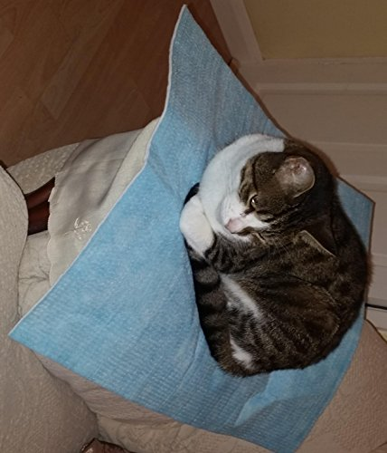 Cama de hamaca para gatos - Suave y cómoda hamaca de mascota con silla para gatito, hurón, perrito o mascota (Caqui)