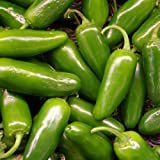 seekay Caliente Pimiento - jalapeño - aprox 190 semillas