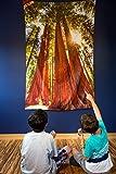 Cultural Intrigue Luna Bazaar Redwoods Foto Gobelin und zum Art Wand (Extra Groß, 4x 5,8Füße, 100% Baumwolle)