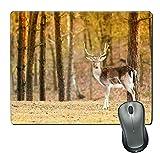 Tapis de Souris en Caoutchouc Naturel/Tapis avec Bords Cousus; Jeune cerf mâle mâle en Automne forêt d'automne Animaux en Habitat Naturel beauté en nature3