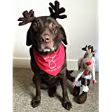 Spoilt Rotten Pets - Bandana para mascotas ajustable para perros medianos/grandes, para labradores