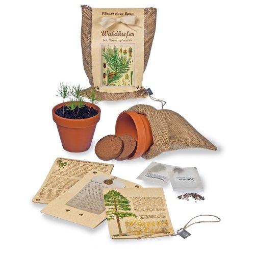 pflanze-einen-baum-baumsaat-set-waldkiefer