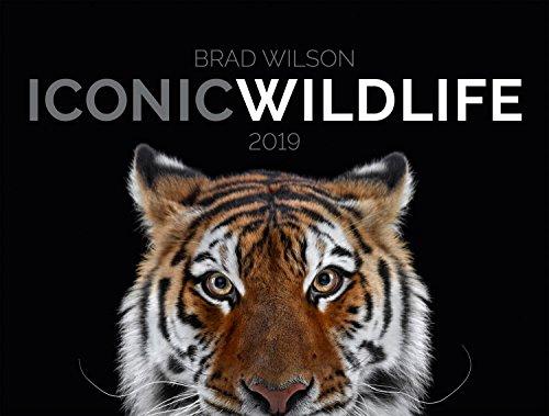 Iconic Wildlife 2019, Wandkalender im Querformat (66x50 cm) - Hochwertiger Tierkalender mit Monatskalendarium